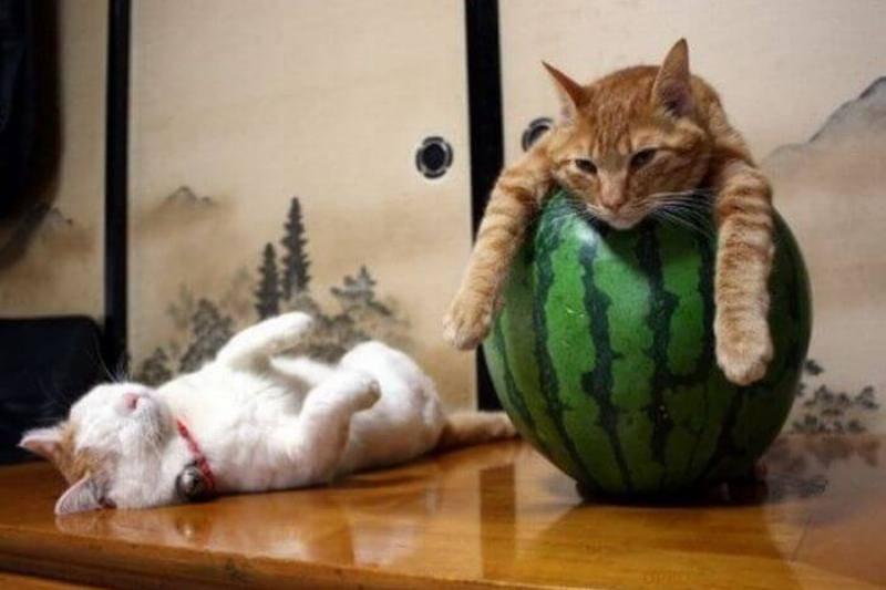 watermelon-90718
