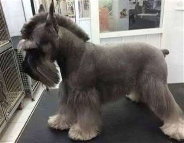 Dog? Donkey? Or Is It A Horse?