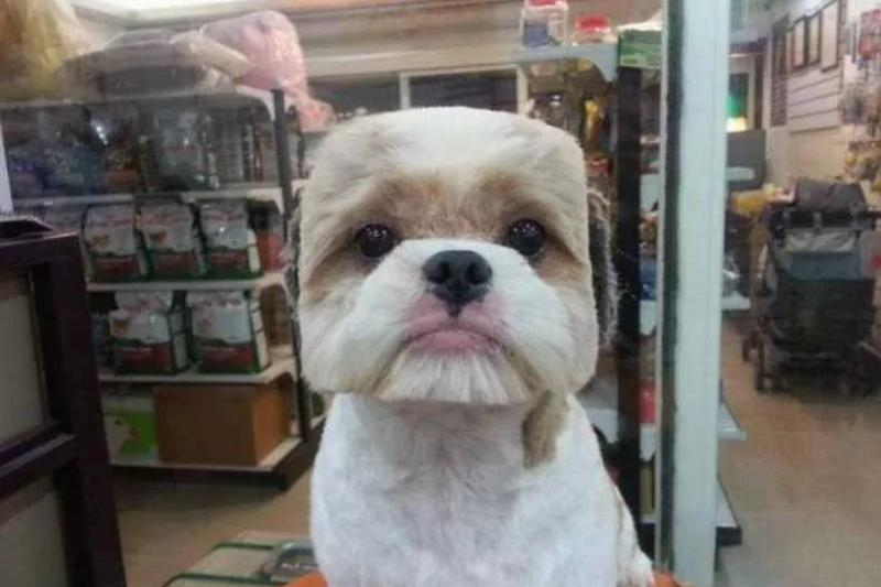 When Your Groomer Thinks You're A Minecraft Dog