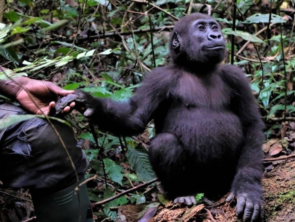 ape-action