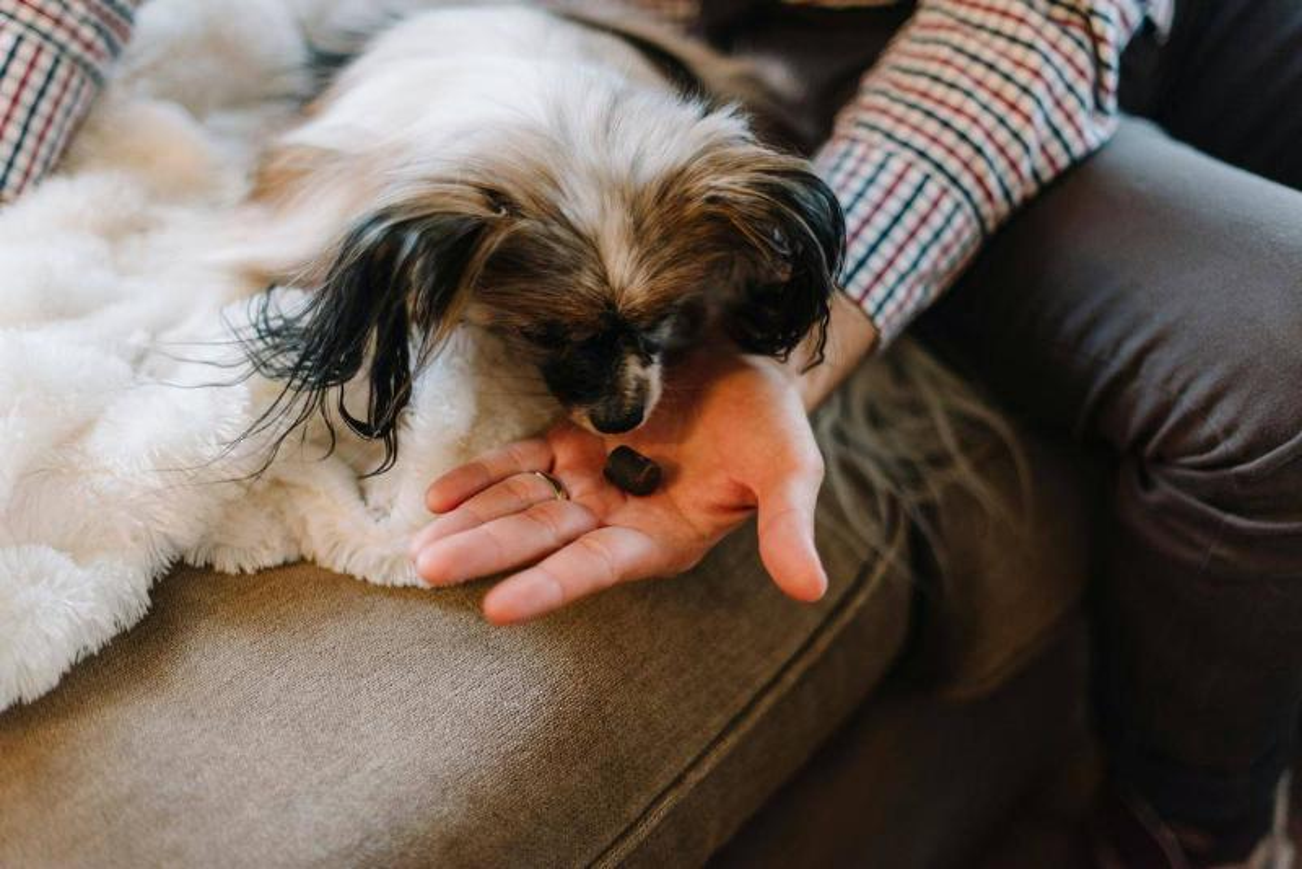 dog-treat
