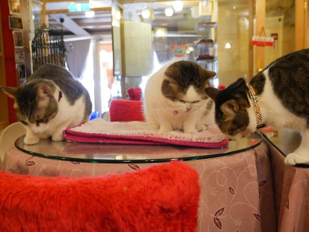 1-27 cat cafes around the world.jpg