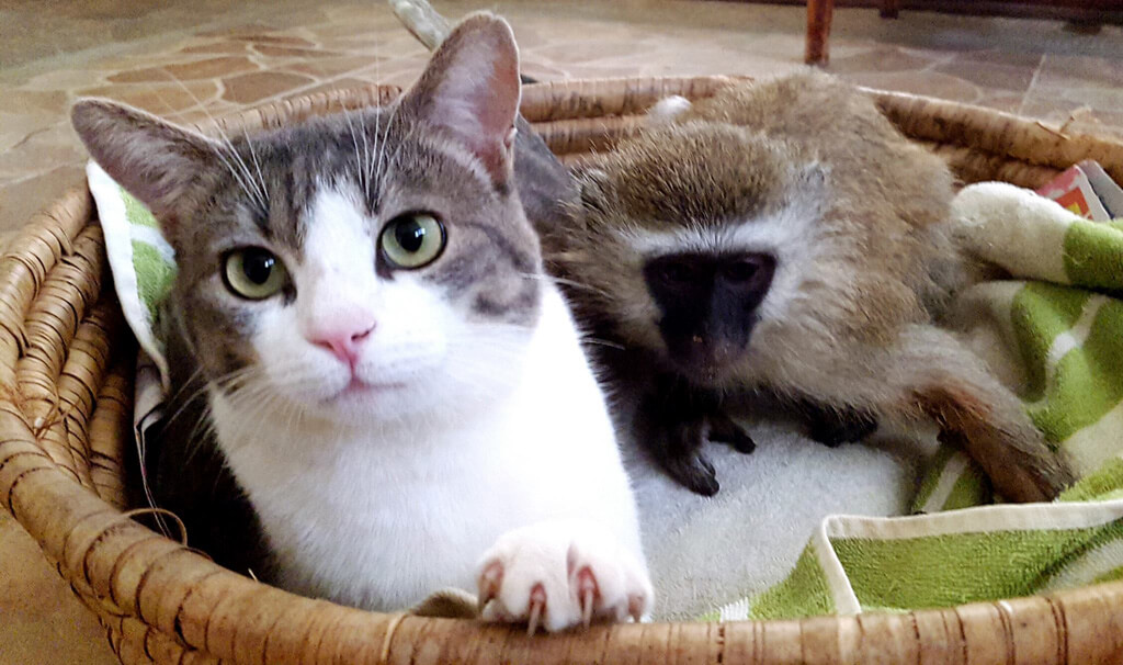 17-orphaned-baby-monkey-makes-unlikely-friends-horace.jpg