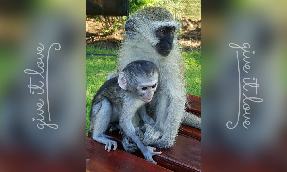 19-orphaned-baby-monkey-makes-unlikely-friends-horace.jpg