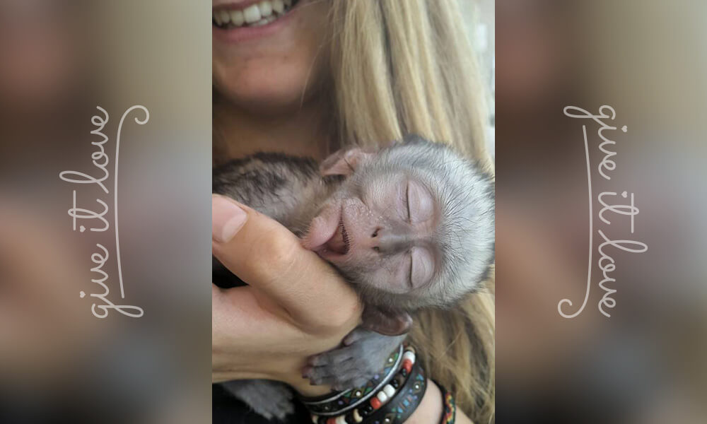 2-orphaned-baby-monkey-makes-unlikely-friends-horace.jpg