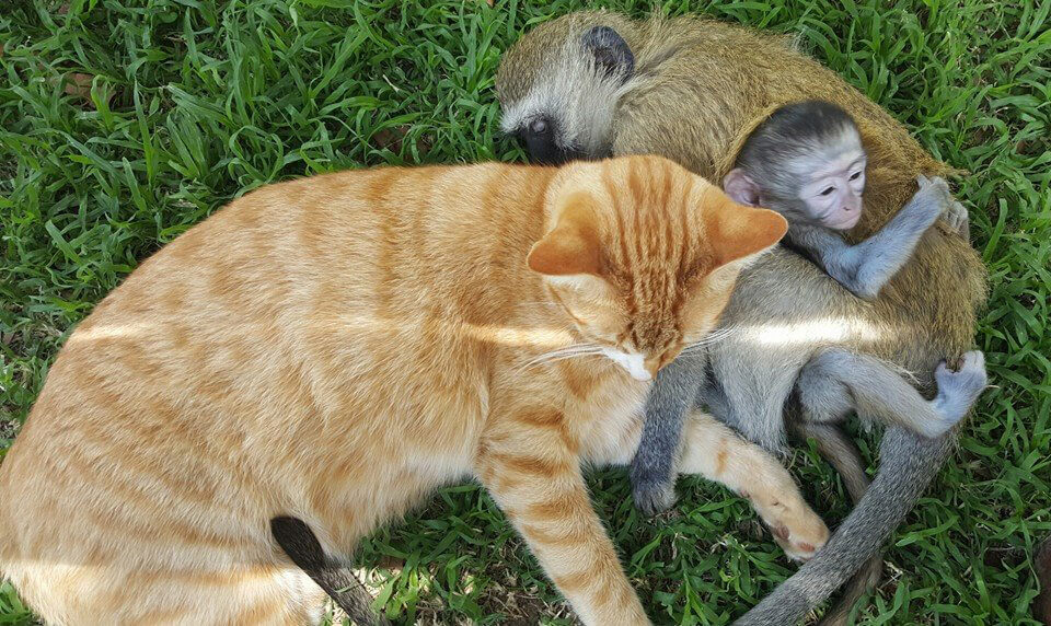 20-orphaned-baby-monkey-makes-unlikely-friends-horace.jpg