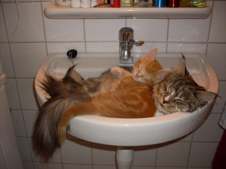 2766b9cd86320780a906651e00042968--bathroom-sinks-cat-naps.jpg
