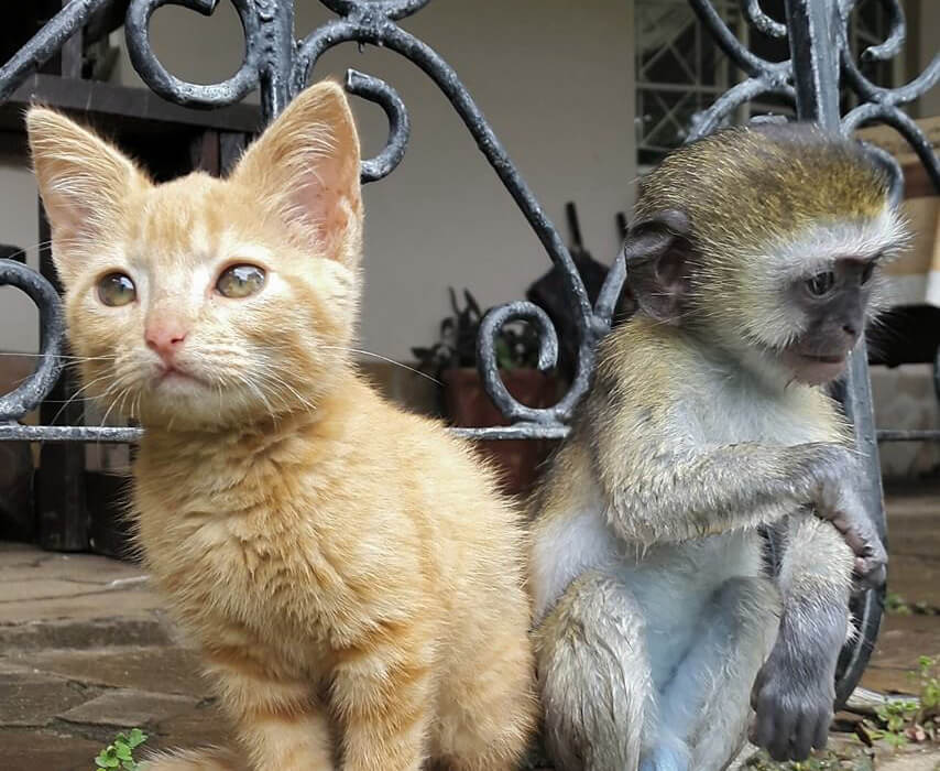 4-orphaned-baby-monkey-makes-unlikely-friends-horace.jpg