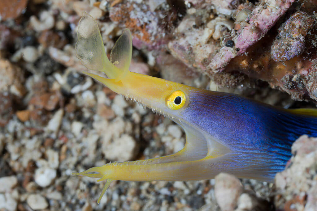 Moray Eels' Colorful Transformation