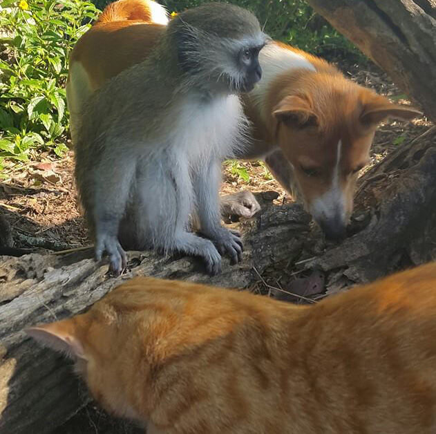 6-orphaned-baby-monkey-makes-unlikely-friends-horace.jpg