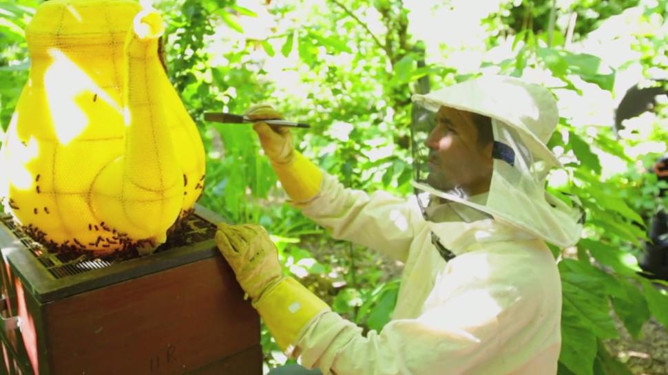 60000 Bees Make A Honey Pot