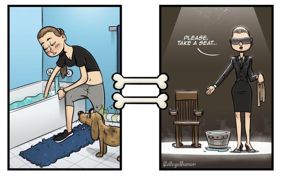 A Dogs Perception Of Taking A Bath
