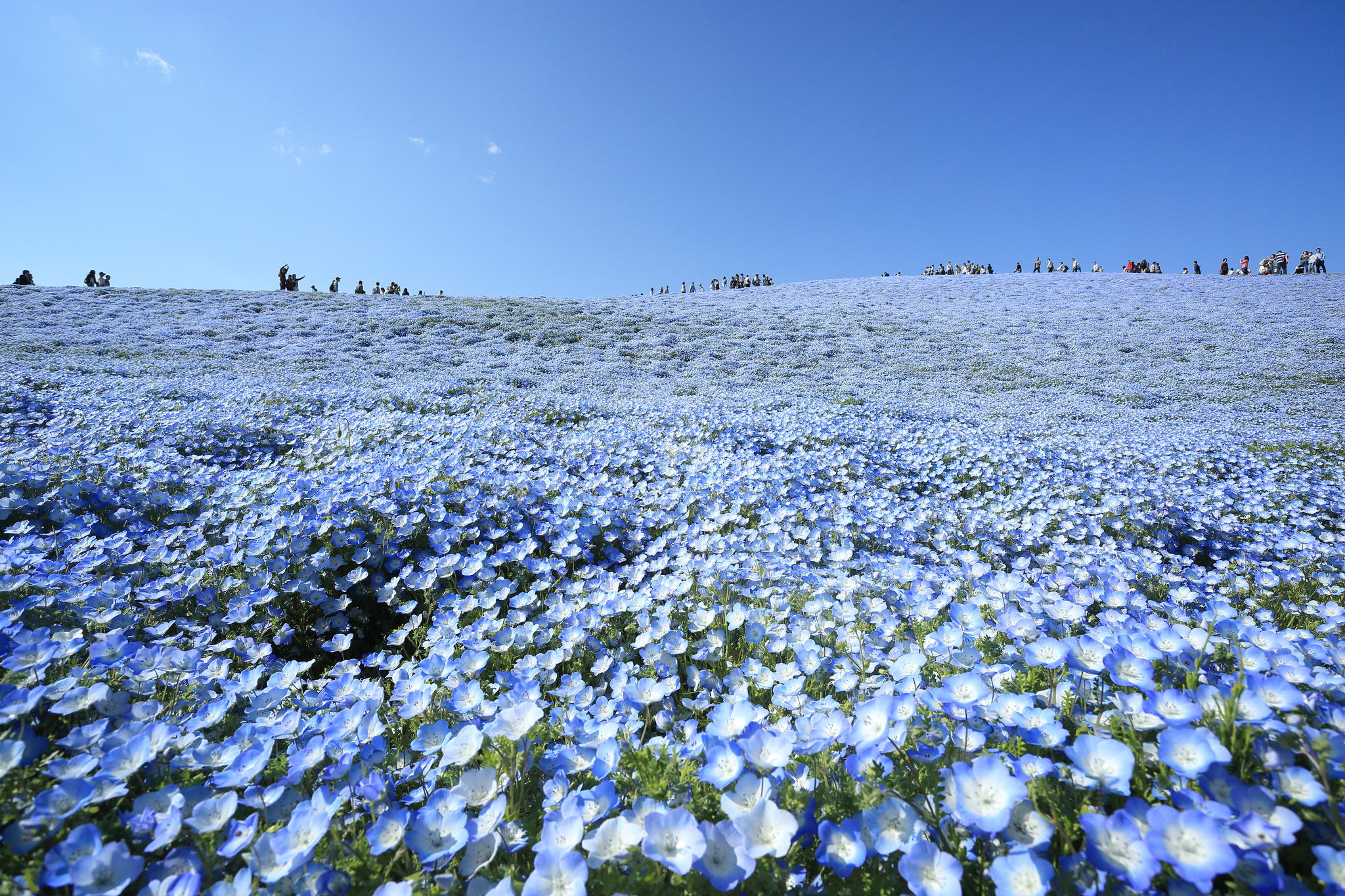 A Field with Millions of Flowers