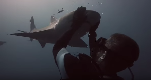 A friendly Lemon Shark named Blondie