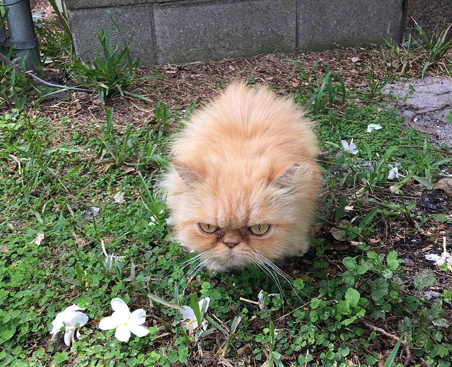 Adopting a grumpy cat