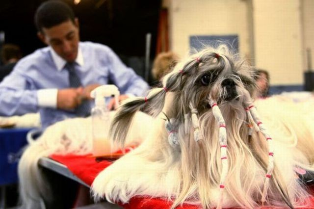 Amazing and Funny Dog Haircut