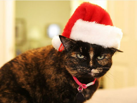 18 Cats Who Hate Christmas Costumes And Christmas Trees