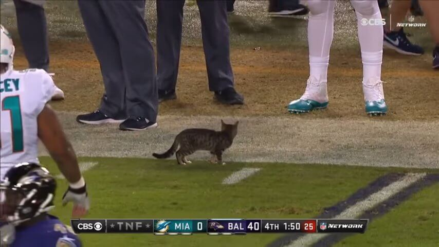 Animal Interference in Football _ Part 2 screenshot.jpg