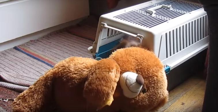 Arvo the Dachshund and bear in kennel