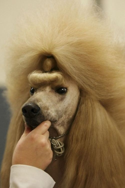 Awesome head of Hair on Dog