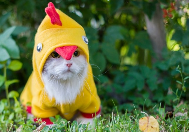 105 Halloween Cat Costumes That Will Make You Smile 78