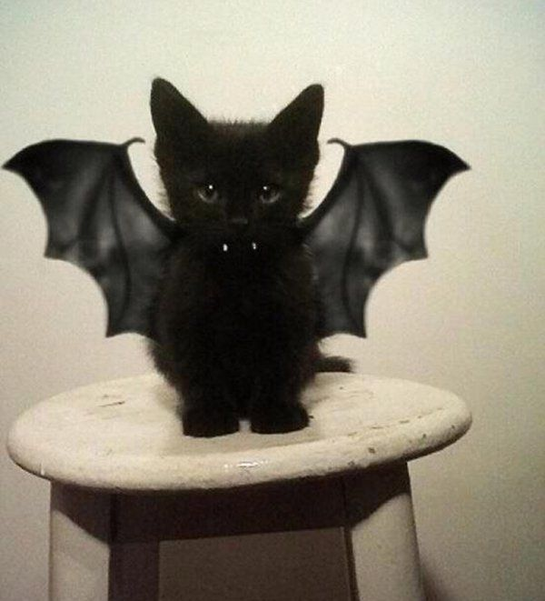 Bat Cat Halloween Costume