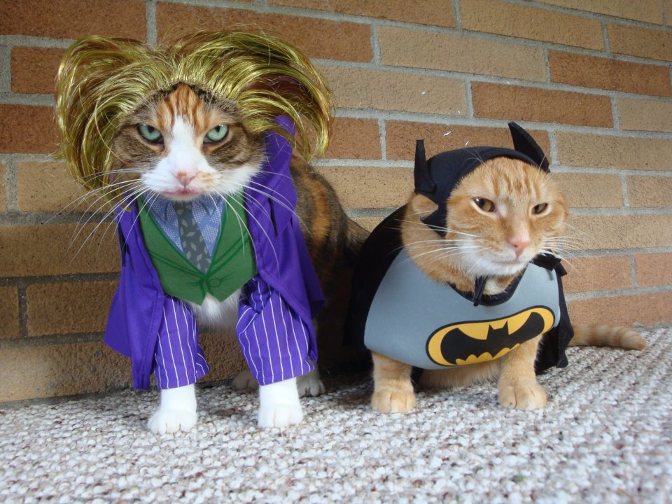 105 Halloween Cat Costumes That Will Make You Smile