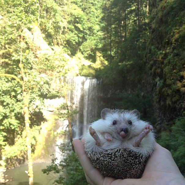 Biddy the Hedgehog Travels all the time