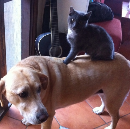 Black Cat Rides Dog