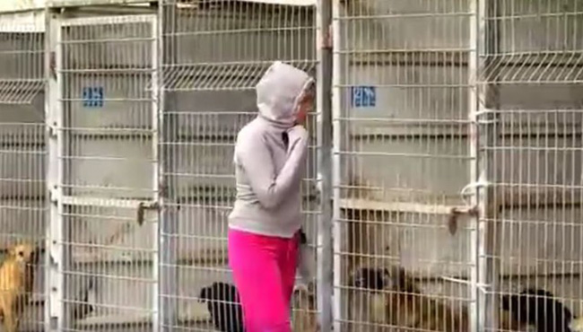 Bought entire dog shelter
