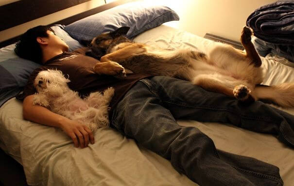 Boyfriend and the two dogs in bed together.jpg