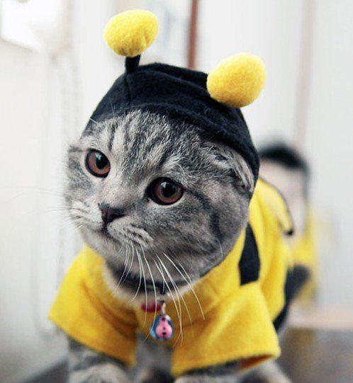Bumblebee Cat - Halloween Costume