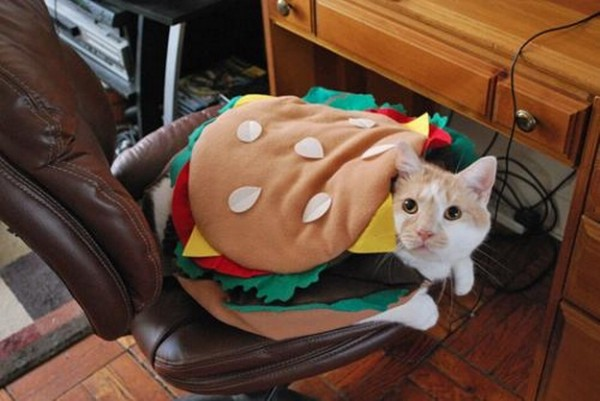 Burger Cat - Halloween Costume