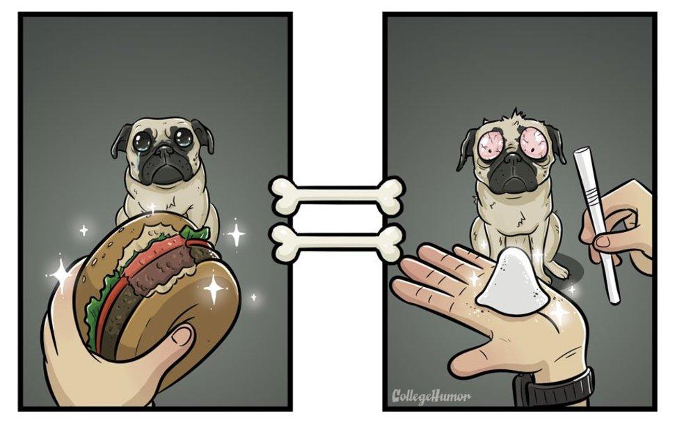 Burger vs Cocaine - A Dogs Perception