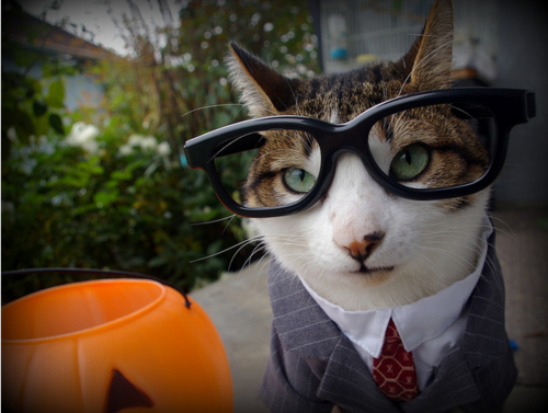 Business Cat Halloween Costume