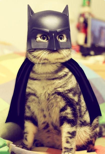 Cat Batman Halloween Costume