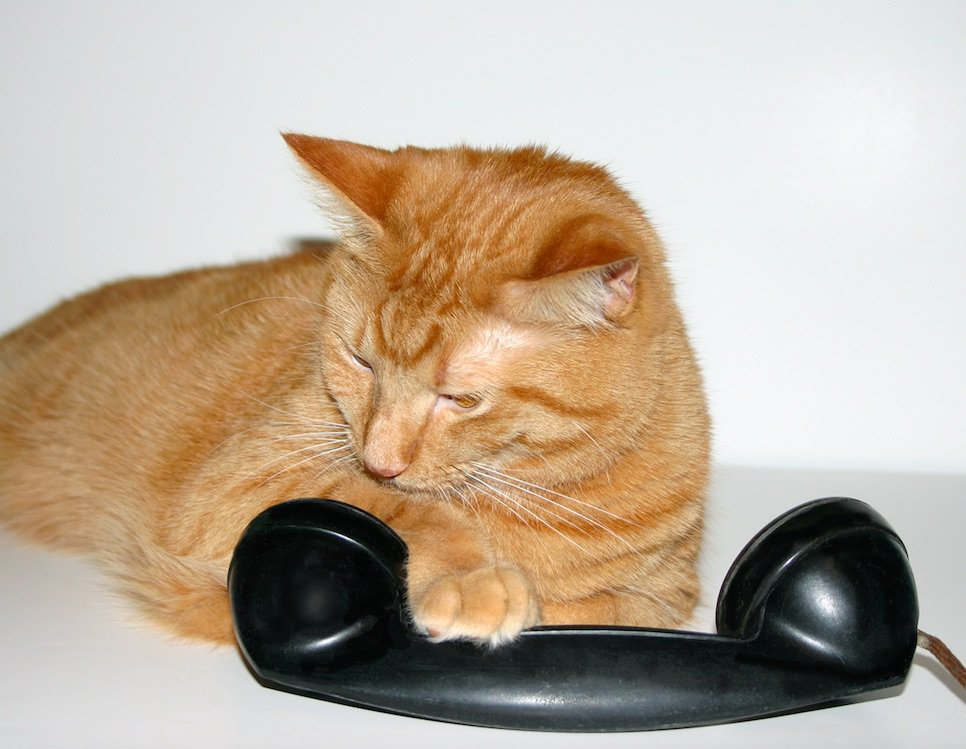 This Cat Dialed 911 To Get Their Owner Help