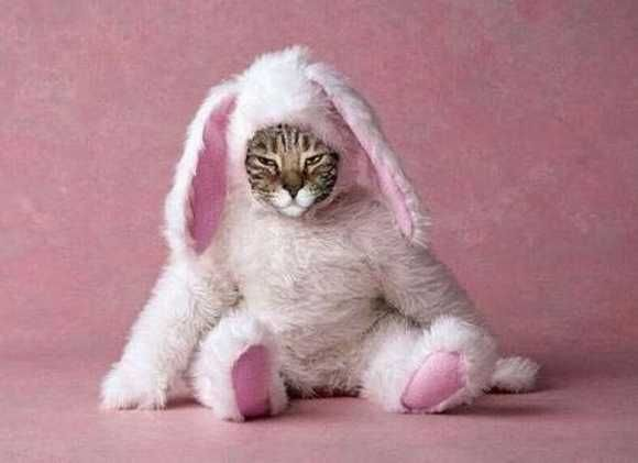 Cat Dressed as a Bunny For Halloween
