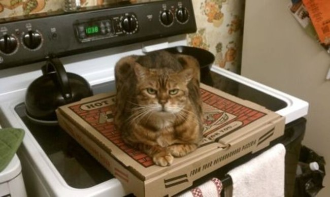 Cat No Pizza For You