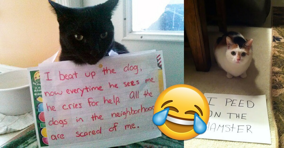 20 Hysterical Cat Shaming Moments