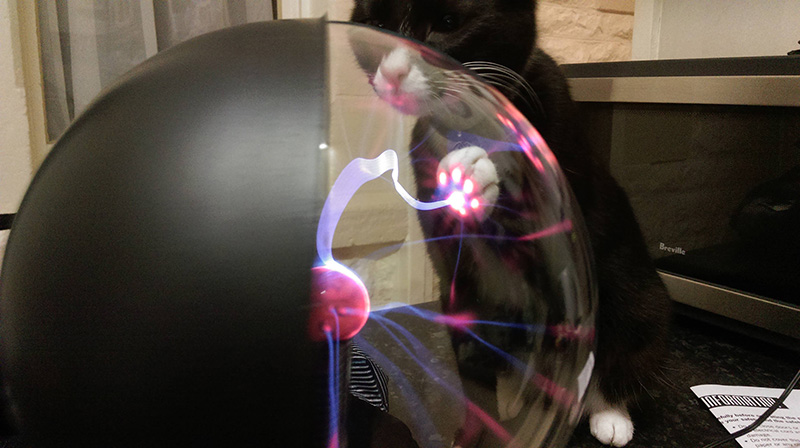 Cat touches plasma ball