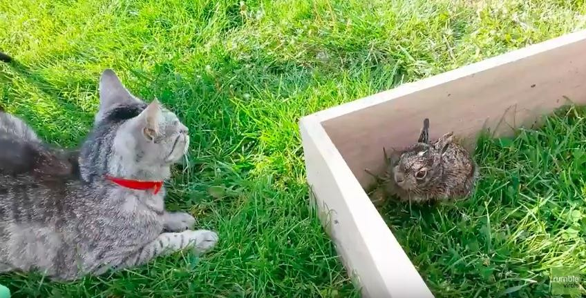 Cat with Bunny