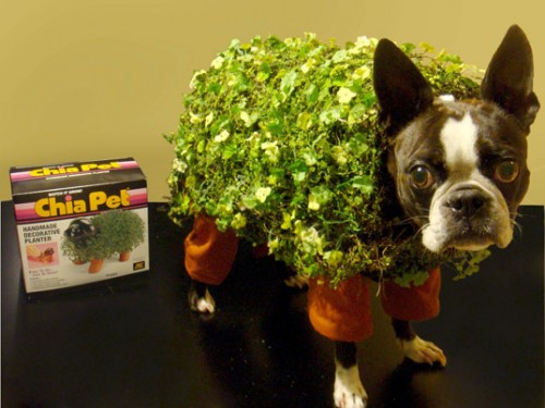 Chia Pet Pup Costume for Halloween