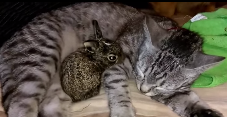 Cute little baby bunny and mommy cat