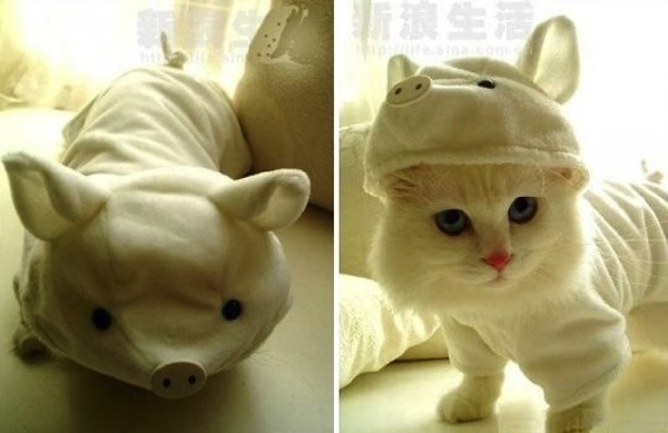 Cutest Pig Cat Halloween Costume Ever
