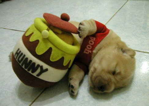 Dog Dressed As Winnie The Pooh - Halloween Costume