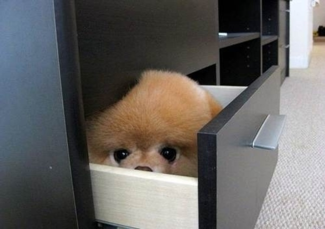 Dog Hiding In A Drawer