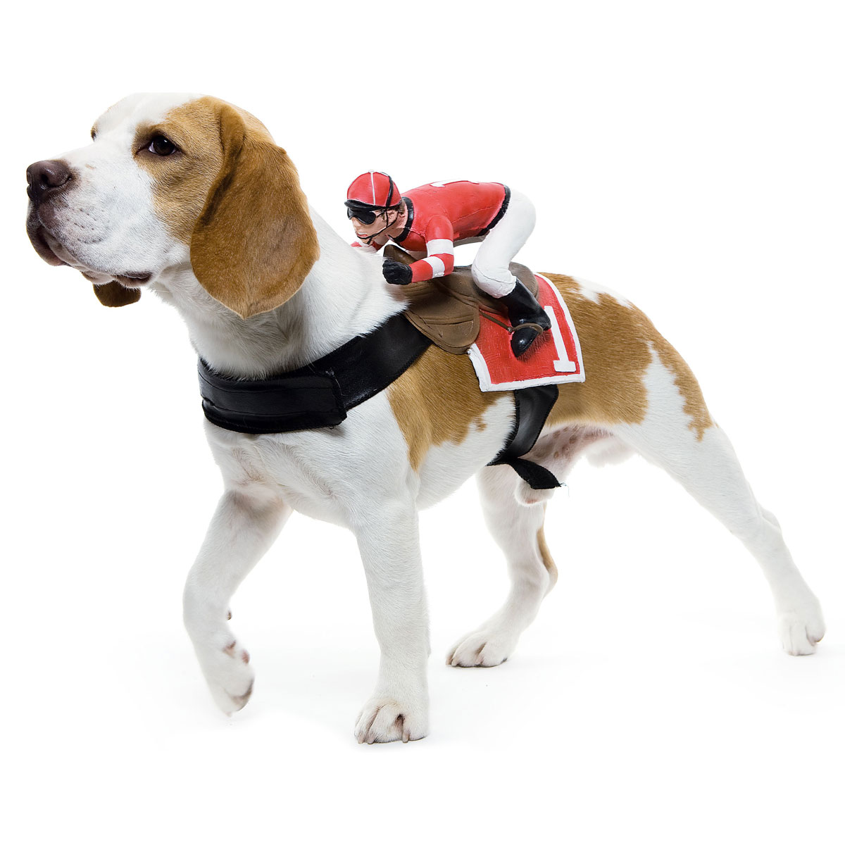 Dog Horse Racing Halloween Costume