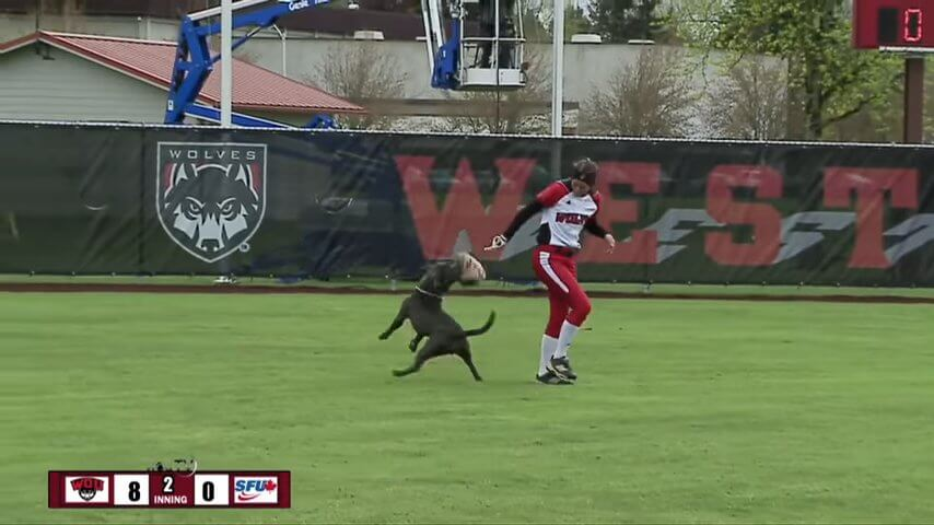 Dog Runs on Softball Field and Steals Players Glove screenshot.jpg