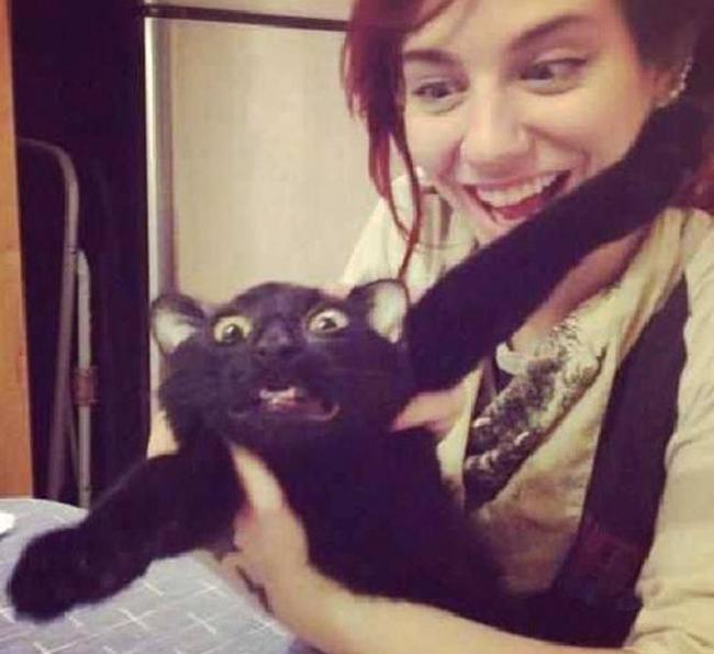 Evil Cat Goes After Owner